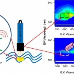 Choo et all - Cyanobacteria Research - Fluorometer