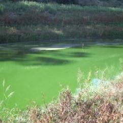 Cyanobacteria workshop  - UNSW Global Water Institute
